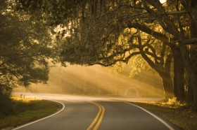 Live oaks frame the road near a plantation.